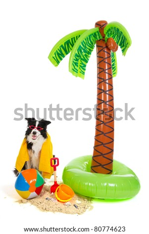 Portrait of a dog on vacation on a tropical beach