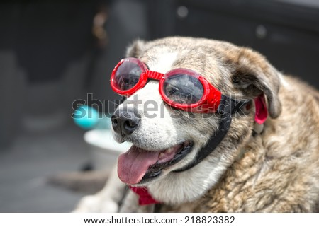 portrait of a dog with glasses
