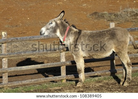 Portrait of a donkey adult in a fence