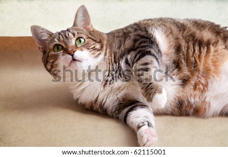 Portrait of a fat cat lying on the floor