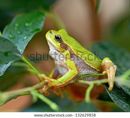 Portrait of a frog habitat estsetsvnnoy