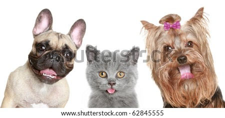 Portrait of a funny kitten and two happy puppies on a white background