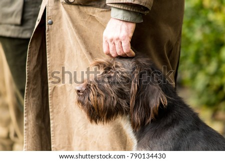 Portrait of a German wirehaired pointer sitting next to his owner the hunter being caressed #790134430