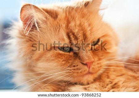 Portrait of a ginger cat background