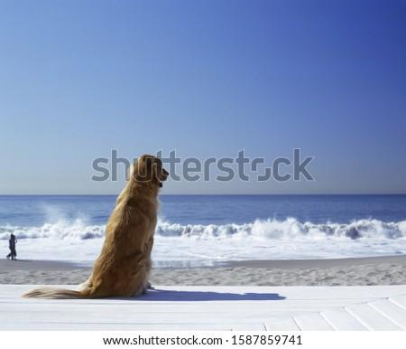 Portrait of a golden retriever sitting on the beach