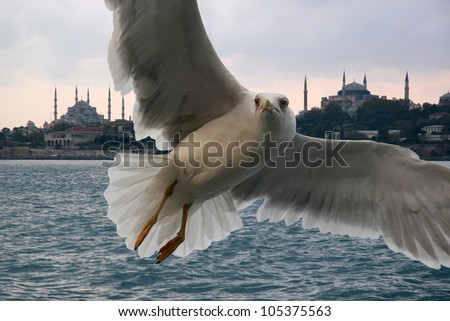 Portrait of a gull over the sea in front of Istanbul
