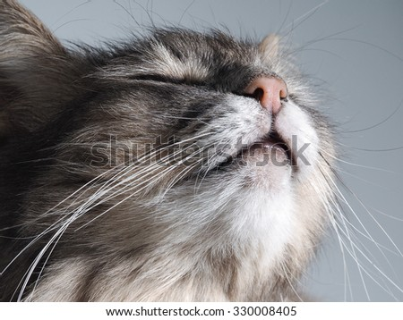 Portrait of a happy cat. The cat is blissfully happy, he\'s happy. Happy face cat big. Aroma. The cat sniffs the smell. Smells good