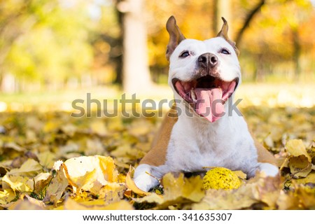 Portrait of a happy dog