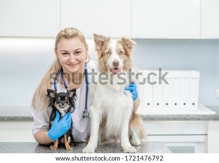 Portrait of a happy veterinarian doctor with dogs in a vet clinic. Empty space for text Foto stock ©