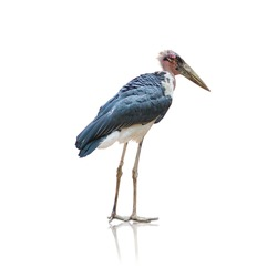 Portrait of a heron on white background