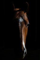 Portrait of a horse in a barn
