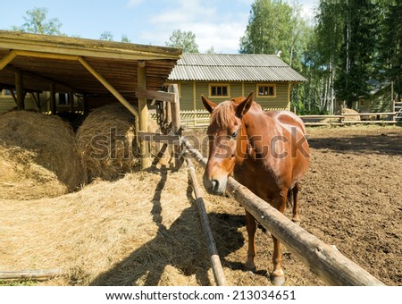 Portrait of a horse in the pasture at a horse farm #213034651