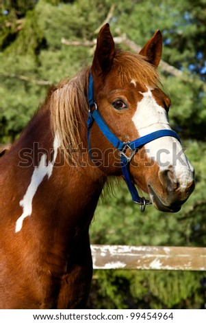 Portrait of a horse standing in a field.