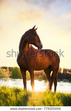 portrait of a horse standing with his back to the sun at sunset on the water