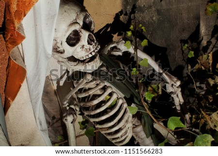 portrait of a life size plastic helloween skeleton that sits at an attic for a long time, ivy branches grow into it, and it is dirty and covered with cobwebs