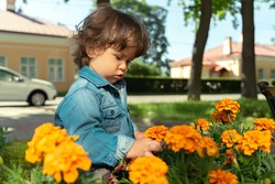 Portrait of a little boy touching or picking a yellow flower in a garden bed in a public park outdoors
