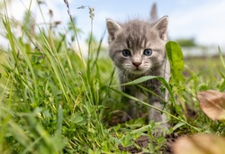 Portrait of a little kitten in green grass on the nature.