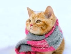 Portrait of a little kitten wearing knitted scarf outdoors in winter