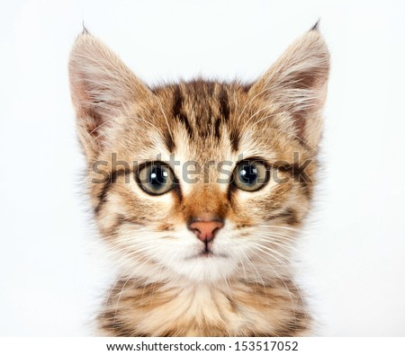 Portrait of a little tabby kitten closeup #153517052