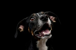 Portrait of a lovely mixed breed dog seems satisfied