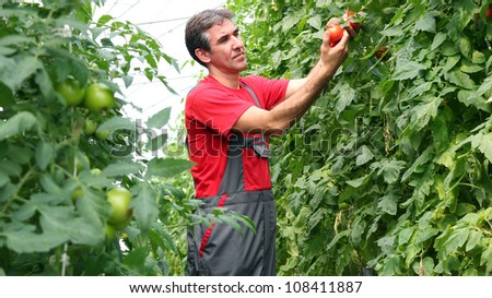 Portrait of a man at work in greenhouse.