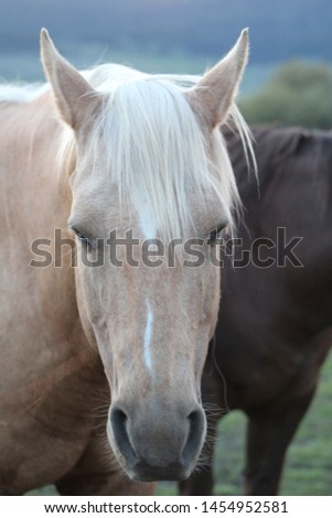 portrait of a palomino horse #1454952581