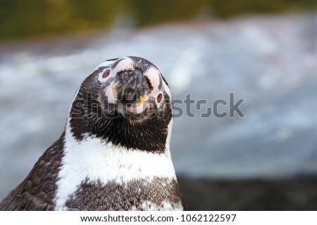 Portrait of a penguin