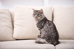 Portrait of a pretty cat is sitting on a sofa.