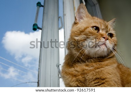 Portrait of a red cat sitting against  an old window