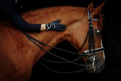 Portrait of a red dressage horse and young woman on black background. Girl with horse. Equestrian sport