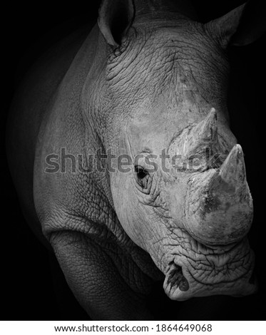 portrait of a rhinoceros at a zoo Сток-фото ©