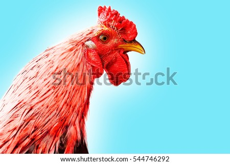 portrait of a rooster's head. isolated on white background. symbol of 2017 on east calendar. Red fire rooster. new year card