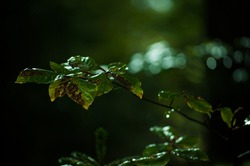 portrait of a rotten leaves somewhere in deep in a forest beautiful green shades colors