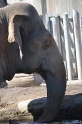 Portrait of a sad elephant caged in a zoo