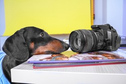 Portrait of a sad pensive dachshund putting head on table with books. Creative dog stares at the camera and looks for inspiration