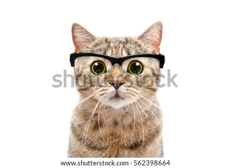 Portrait of a Scottish Straight cat with glasses, closeup, isolated on white background #562398664