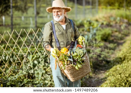 Portrait of a senior well-dressed agronomist with basket full of freshly picked up vegetables on the garden outdoors. Concept of growing organic products and active retirement #1497489206