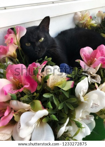 Portrait of a sleepy black cat with flowers. Cat lying in the decoration flowers.