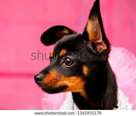 Portrait of a small doggie with a trailing ear #1365955178