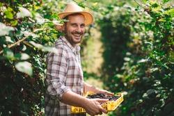 Portrait of a smiling farmer. Farmer harvesting blackberries on the field.