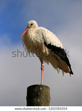 portrait of a stork on a wooden pole #1202581054