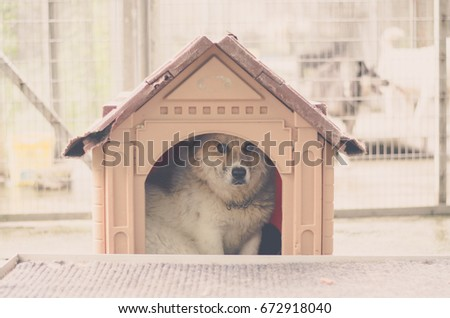 Portrait of a stray dog in kennel #672918040