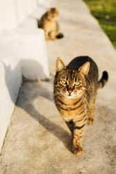 Portrait of a street cat, beautiful three-colored cat walking along the road and looking at the camera