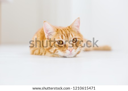 Portrait of a striped domestic red cat on a white background #1210615471