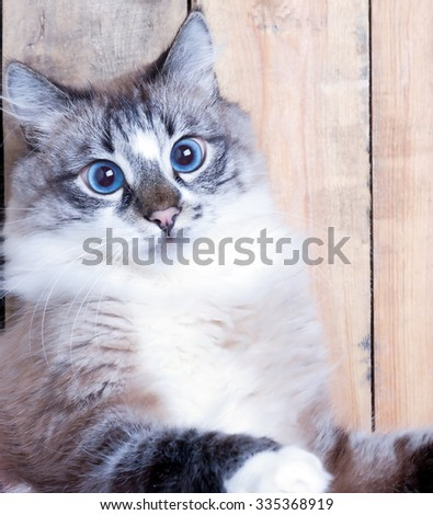 Portrait of a surprised cat