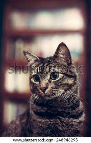 Portrait of a tabby cat in a 1920s era library with barrister bookcases with vintage filtered effect