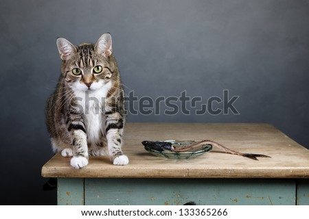 Portrait of a three colored housecat sitting on table with an eaten herring looking guilty towards the viewer