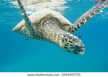 portrait of a turtle who floats in the sea #1044469705