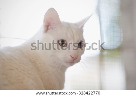 Portrait of a white domestic cat with green eyes. #328422770
