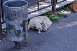 Portrait of a white homeless dog sleeping on the street near the trash can. A mixed breed pet is lying on the ground. Lost and abandoned animals concept. Selective focus.